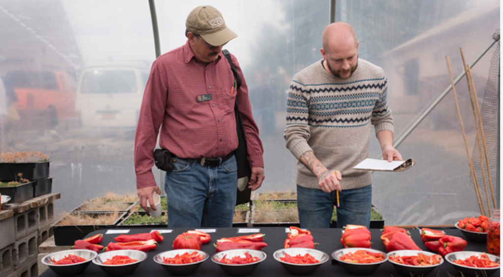 The Culinary Breeding Network leads a pepper tasting.